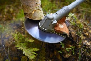 skogsavtalet